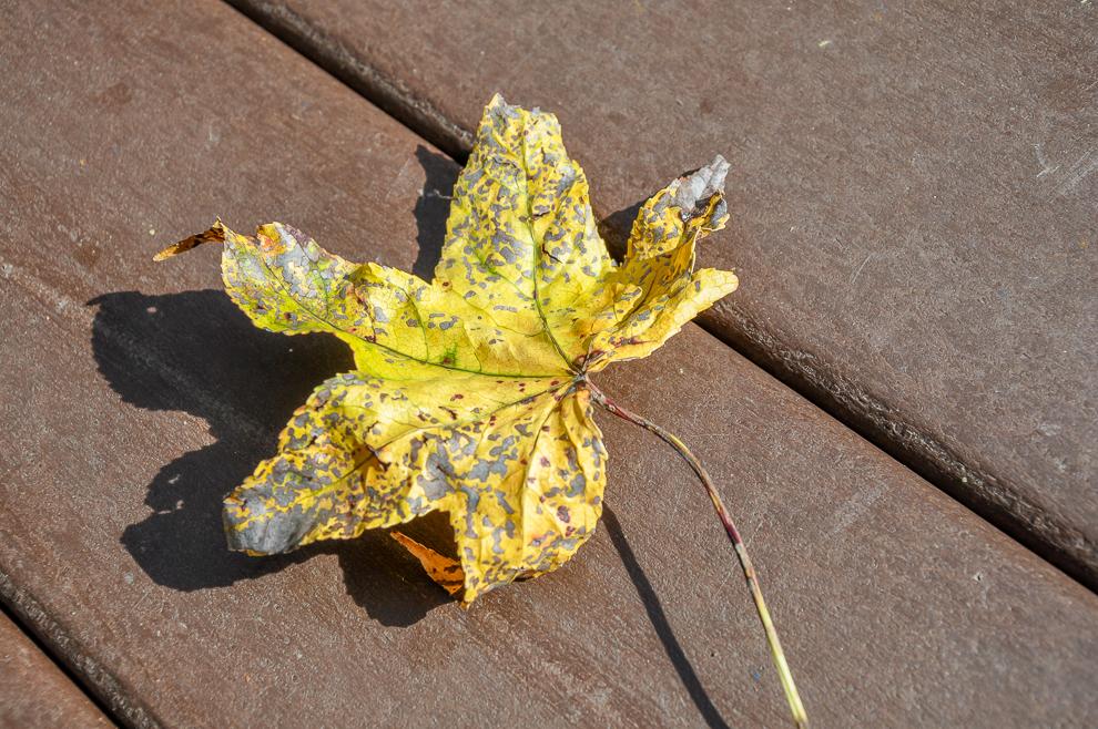 2010 10 24 Golden Leaf at Andrews AFB Washington DC DSC_0003